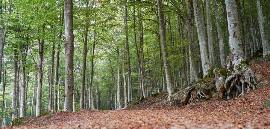 Sentieri bosco Monte Amiata