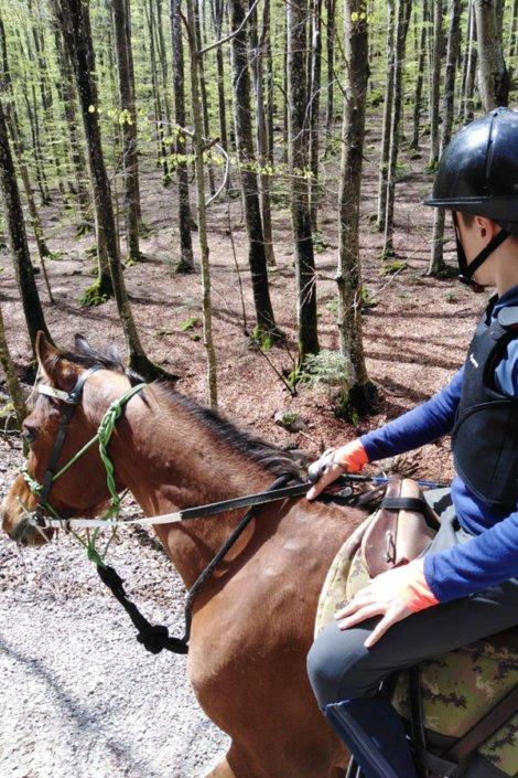 A cavallo nella Faggeta