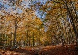 La faggeta del Monte Amiata in autunno